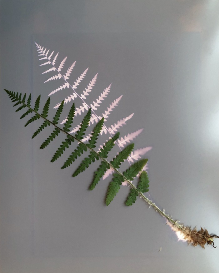 Fern Lumen before scanning